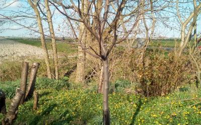 Fruitbomen op 29 februari